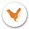 Daroca (Zaragoza), granjas de gallinas ponedoras en expansión